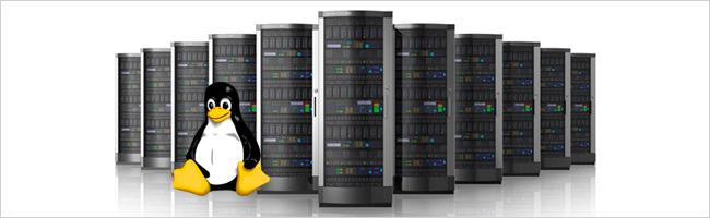 lựa chọn máy chủ Linux